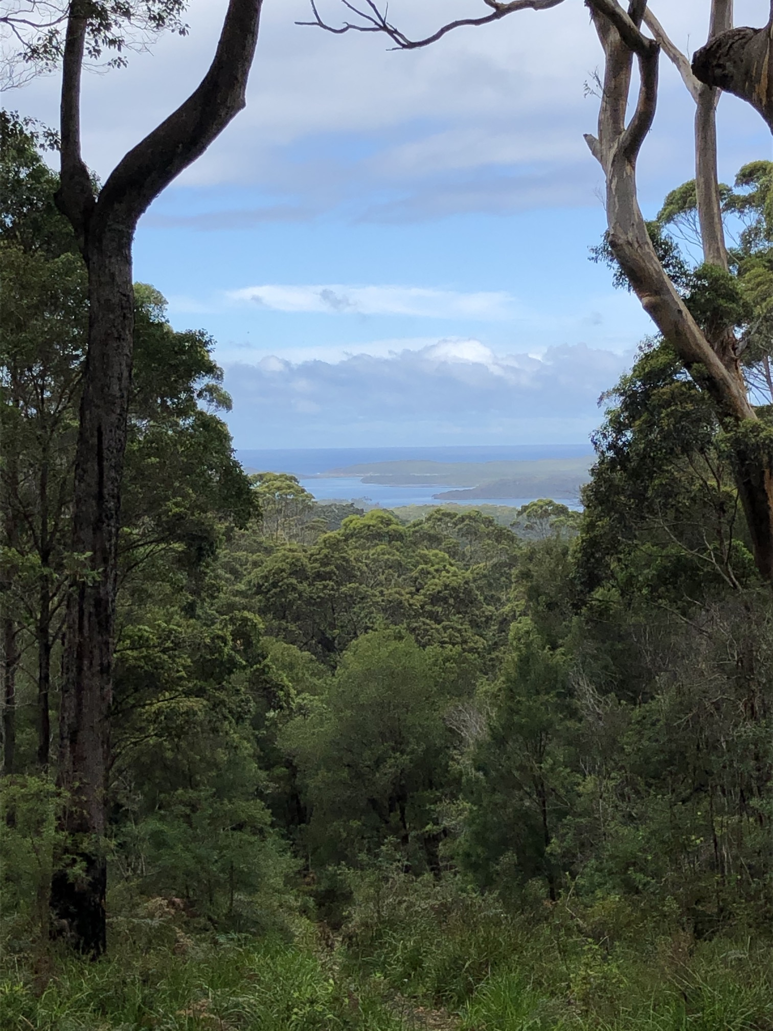 2020-03-31a View from lovely tall Gt Southern forest, over to Nornalup Inlet leading to sea