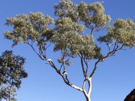 2020-07-23  Karijini termite mound