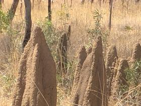2020-08-16  Termite mounds by Stuart Highway, NT