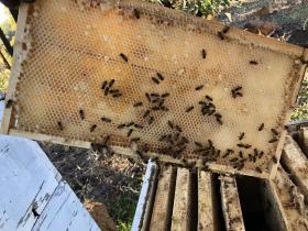 2020-06-21  Bee-hive at Yarloop